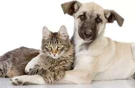 Asistencia médica veterinaria en tu hogar