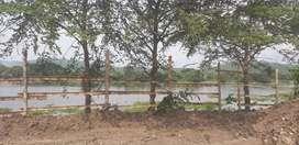 Vendo terreno al pie de la carretera y con salida al Río Daule. 18.400 m².