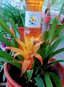 Se vende miel de abeja multifloral