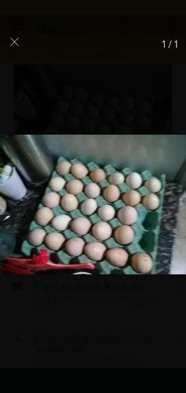 Venta de Huevos Caseros