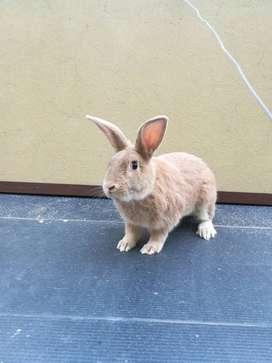 Conejo Lucky en adopción