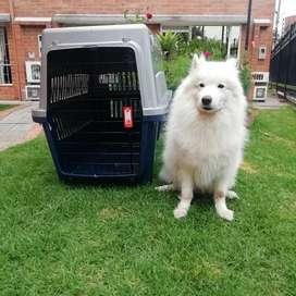 Guacal para perro Xl