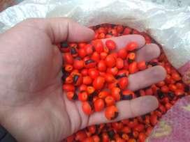 Semillas de Huayruro