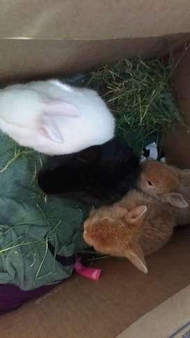 Vendo conejitos!!