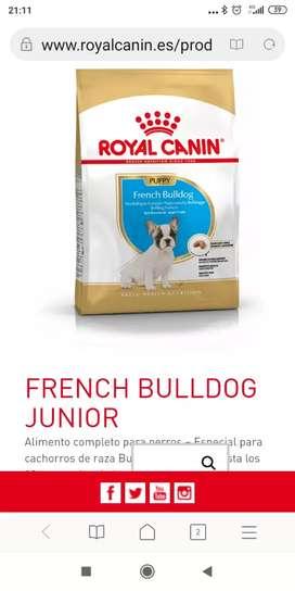 Bulldog francés puppy