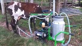 Venta hermosa vaca primer parto