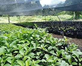 Arboles Nativos para reforestacion