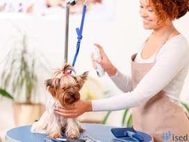 Se Necesita Peluquero Canino a Domicilio