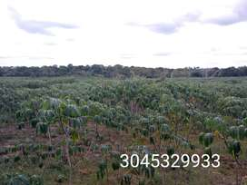 Terreno de 5.5 hectáreas Sampués