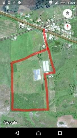 Vendo Campo 23 hectareas con 60 techos de invernadero / Galpon / Tractor / Desmalezadora