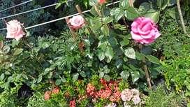 Vivero jardinería