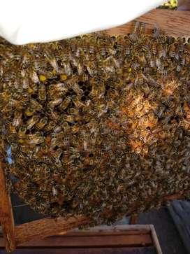 02 colmenas, abejas