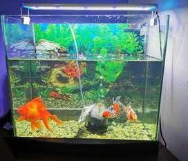 Venta acuario y pescados