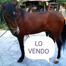 Lo vendo caballo