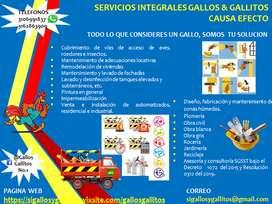 Servicios Integrales Gallos&Gallitos