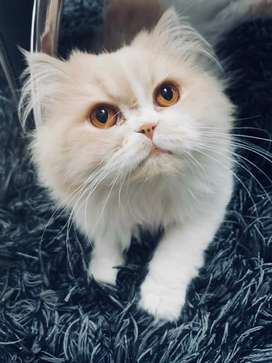 Gato busca gata persa