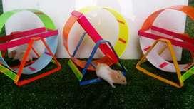 Juegos para hamster