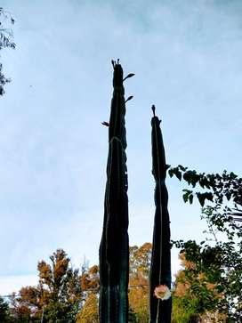 cactus  desde 50 cm a 1 metro