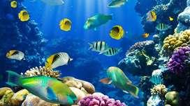 Busco pecesitos en adopción