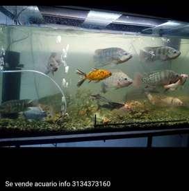 Se vende acuario con pesces baratisimo