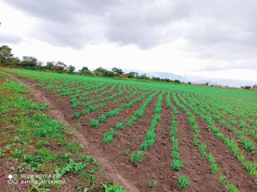venta de 6 hectáreas productivas de terreno en Mira, Carchi 0