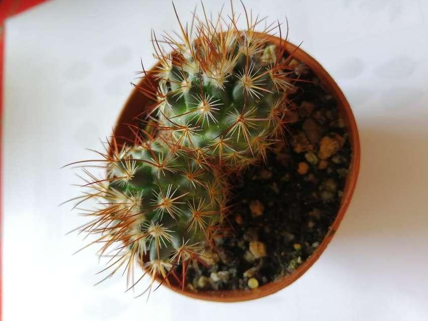 Cactus de Coleccion 0