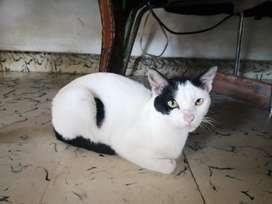 en Adopción Gato de 9 Meses