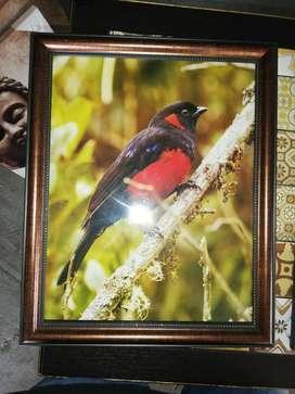 Pájaros Colombianos
