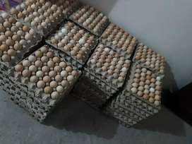 Venta de huevos a domisio