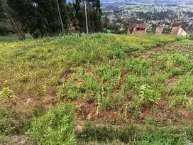 Vendo terreno en Cashapampa