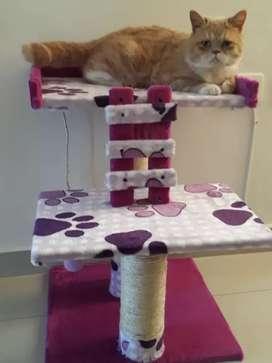 Rascadores y gimnasios para gatos afrodita