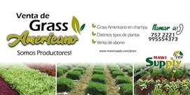 GRASS AMERICANO / ABONO  / PLANTAS EN SU VARIEDAD