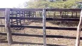 Finca 63 hectáreas