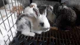 Conejos desde 28 dias