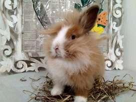 Conejos en Bogota