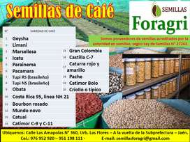 SEMILLAS DE CAFE GEISHA, PACAMARA, MARSELLESA, CATIMOR Y OTROS