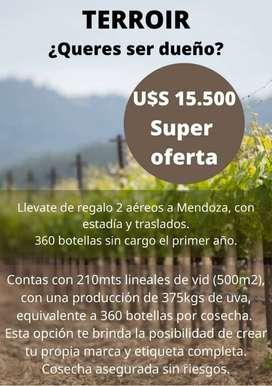 Viñedo - Terroir Con Producción Asegurada