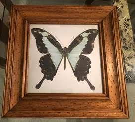 Cuadro 45x45 cm con marco en madera