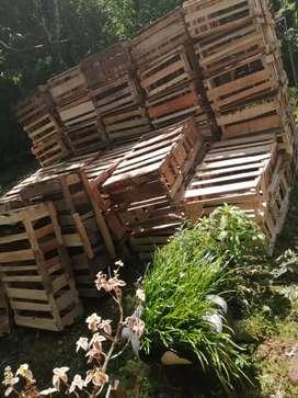 Guacales madera para pollas ponedoras