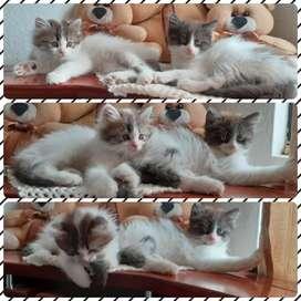 Gatitos-macho-hembra