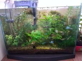 Se vende acuario plantado de agua dulce