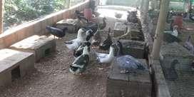 Vendo Granja avicula