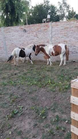 Venta de pony