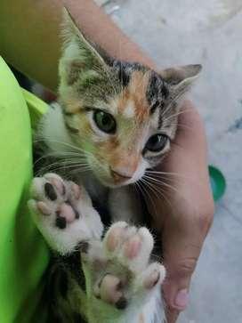 Adopte a un gato