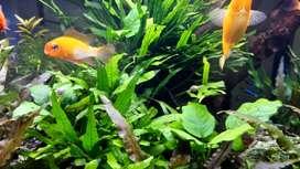 Se vende acuario ResunDm400