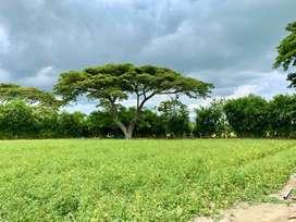 Vendo lindo lote cerca a la Tinaja, esquinero de 3 mil metros, 300 millones de pesos