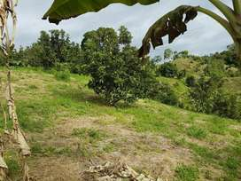 Finca Aguacat 9,2 Hect A12km de Mariquit