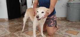 Se da en adopción hermoso y cariñoso perrito