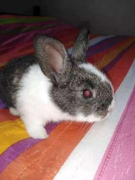 Hermosos Conejos 23 a 25 días de nacidos