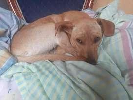 Perrito de 7 meses en adopción